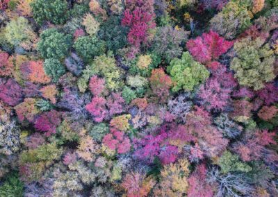 New England Foliage